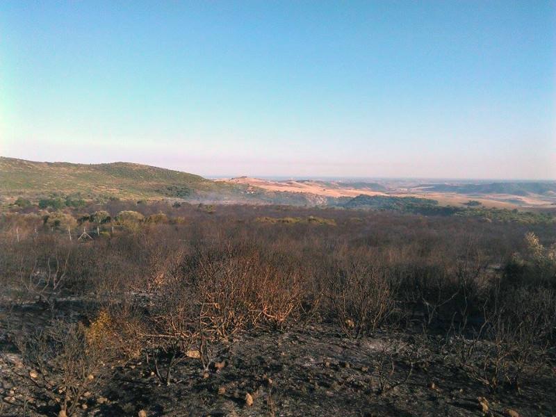 Effetti dell'incendio in località Lucignano (Matera) 2015