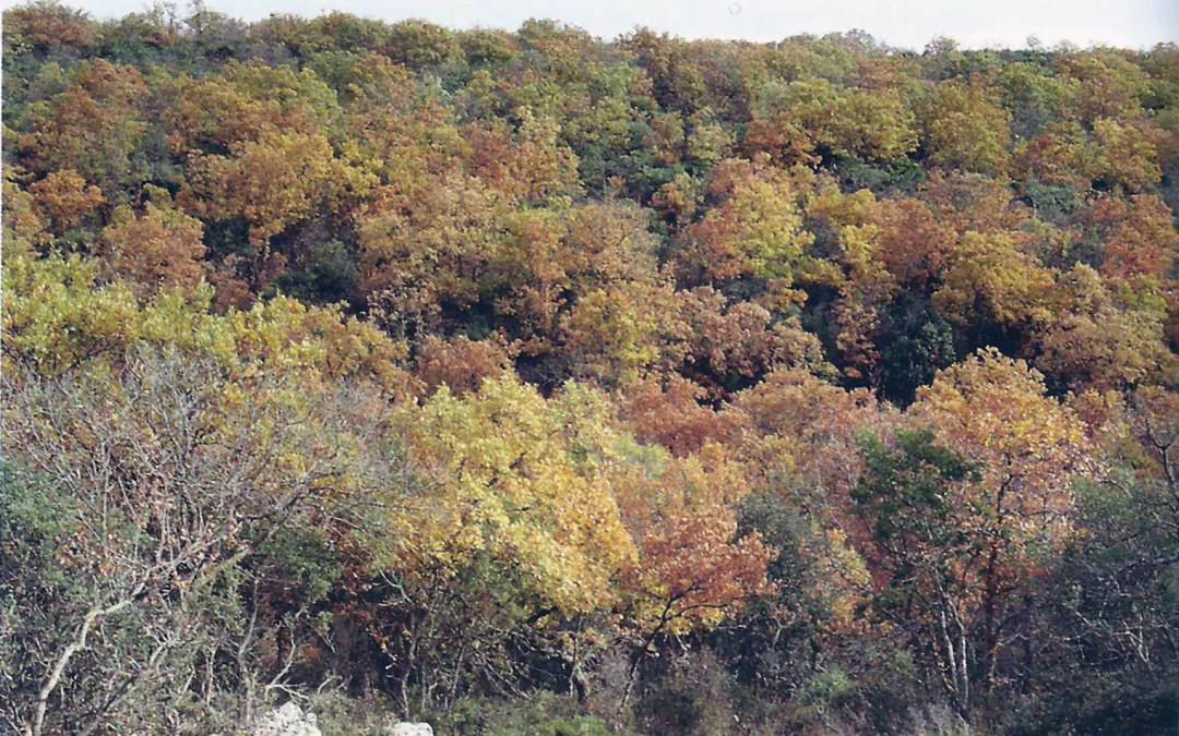 Lucignano: il bosco sacro della Murgia Materana